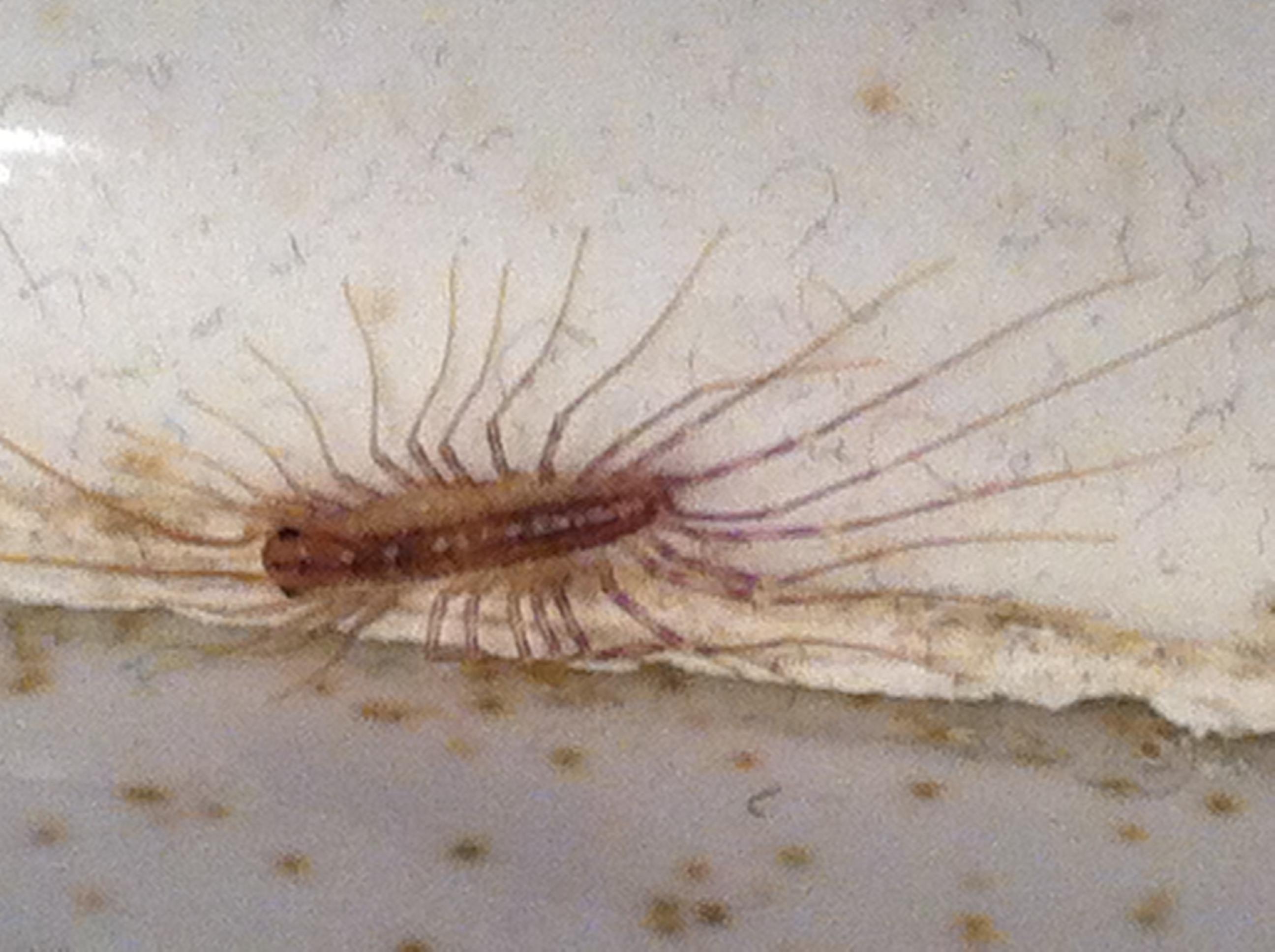 Bug Pictures Arizona Pest Termite Control Blog